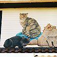 Chats peints sur maison (détail)